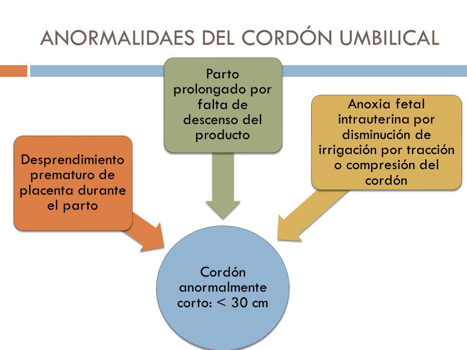 ANORMALIDADES DEL CORDÓN UMBILICAL - ppt video online descargar