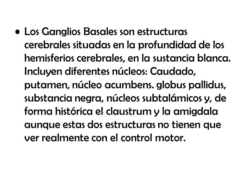 DIENCEFALO, GANGLIOS BASALES Y SISTEMA LIMBICO - ppt video online ...