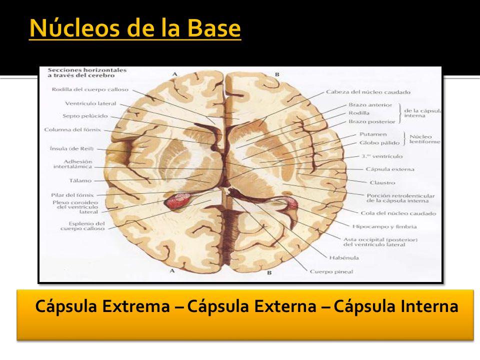 Cerebro Localización Funcional de la Corteza Cerebral - ppt video ...
