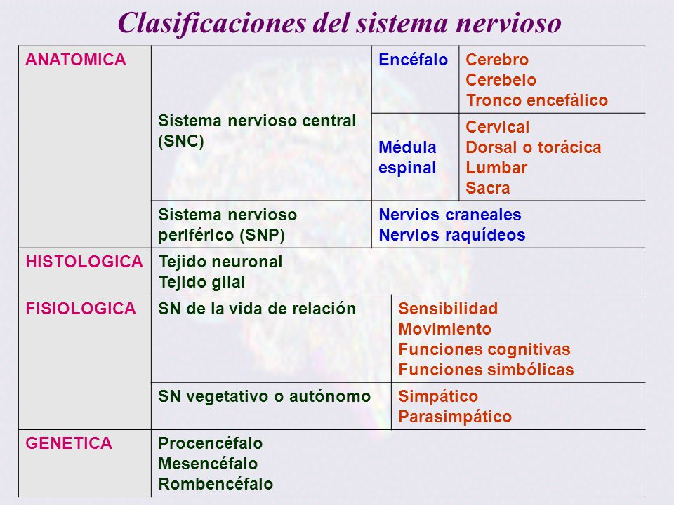 Organización General del Sistema Nervioso William Guevara Ortega ...