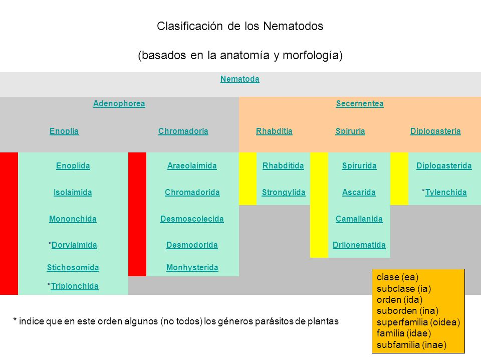 Identificación de los Nematodos y Ecología del Suelo - ppt descargar