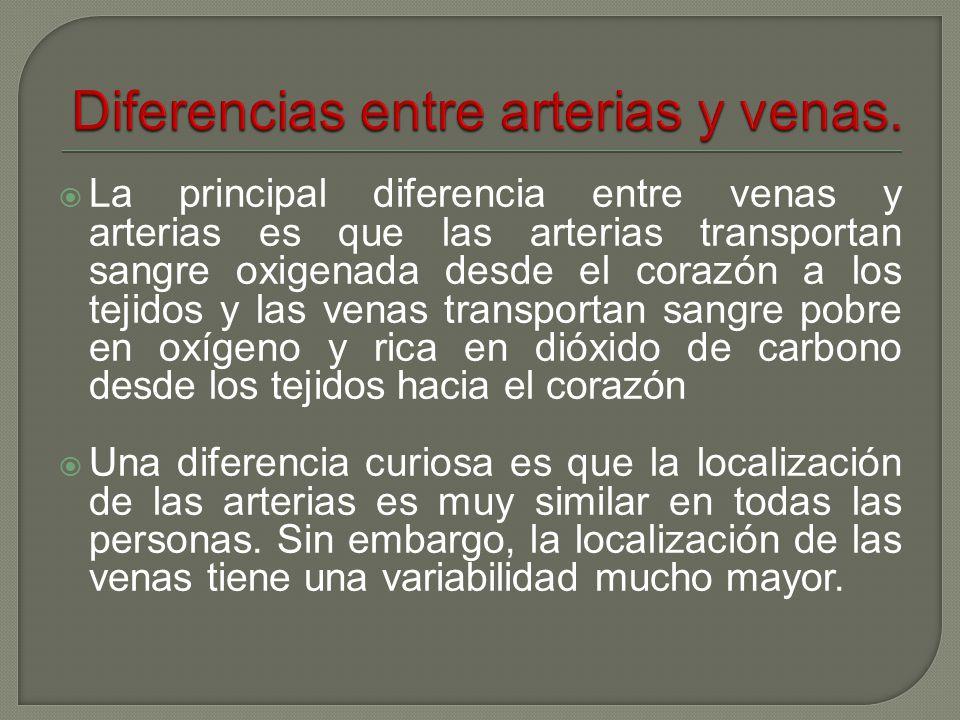 VENAS Anatomia y Fisiología 5toA2 Alumno: Juan Pablo García ...