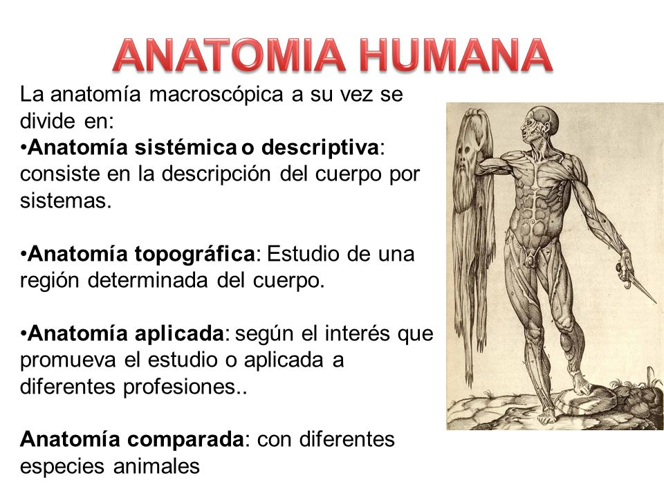ANATOMIA HUMANA. - ppt video online descargar