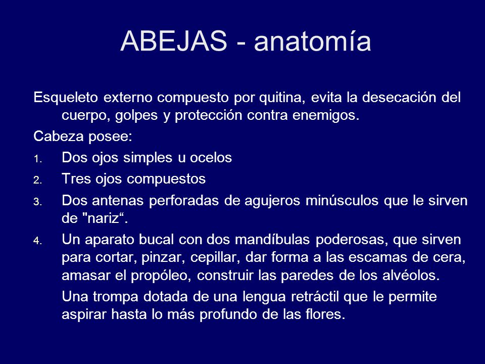 Bonito La Anatomía De Una Abeja Bosquejo - Imágenes de Anatomía ...