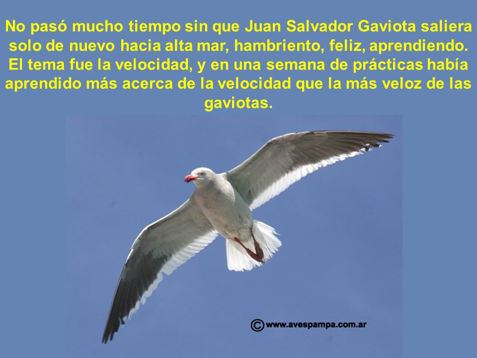 Richard Bach Juan Salvador Gaviota Fragmentos Ppt Descargar
