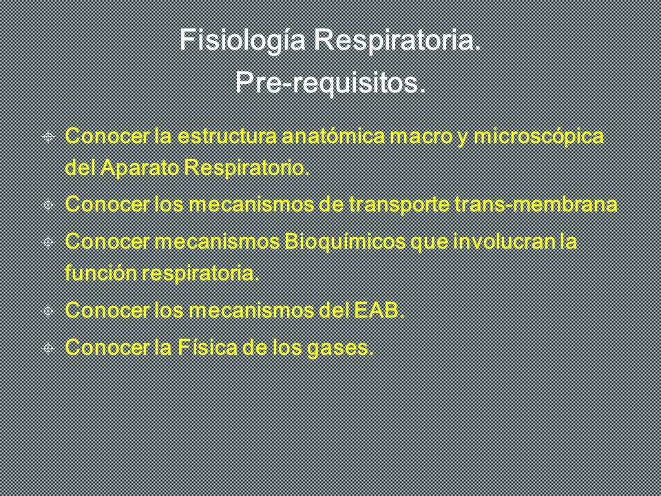 FISIOLOGIA RESPIRATORIA - ppt video online descargar