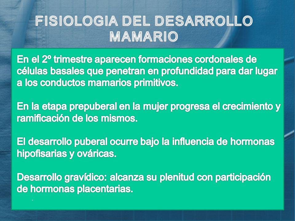 Excepcional La Anatomía Y La Fisiología Del Cáncer De Mama Foto ...