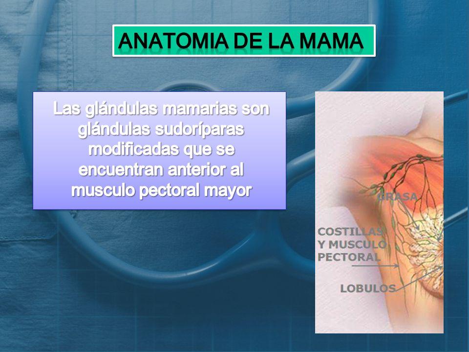 ANATOMIA DE LA GLÁNDULA MAMARIA. - ppt descargar