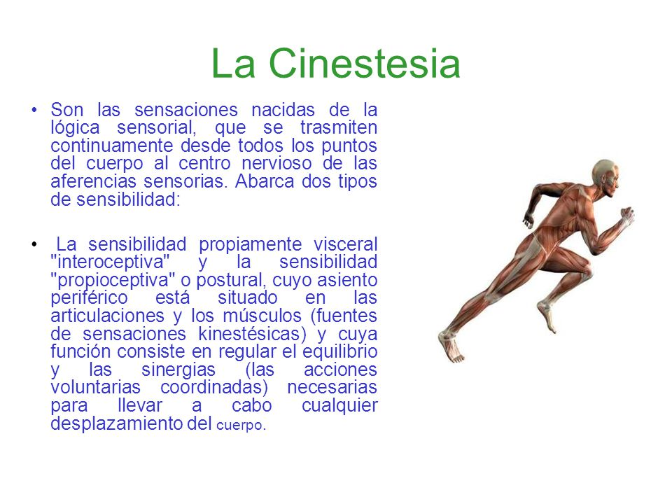 SENTIDO CINESTÉSICO Y VESTIBULAR. 1º. CUATRIMESTRE DE L.P. - ppt ...