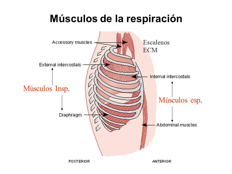 FISIOLOGIA DE LA RESPIRACIÓN (Bases cuantitativas y Mecánica ...