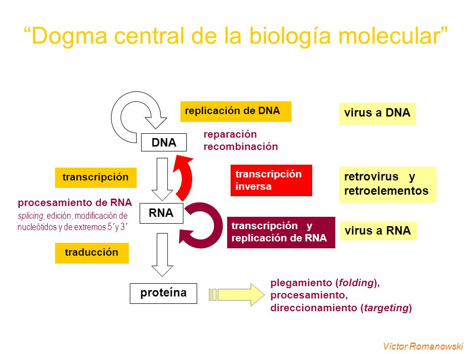 Genética Molecular Clave Cromatina Ppt Video Online Descargar