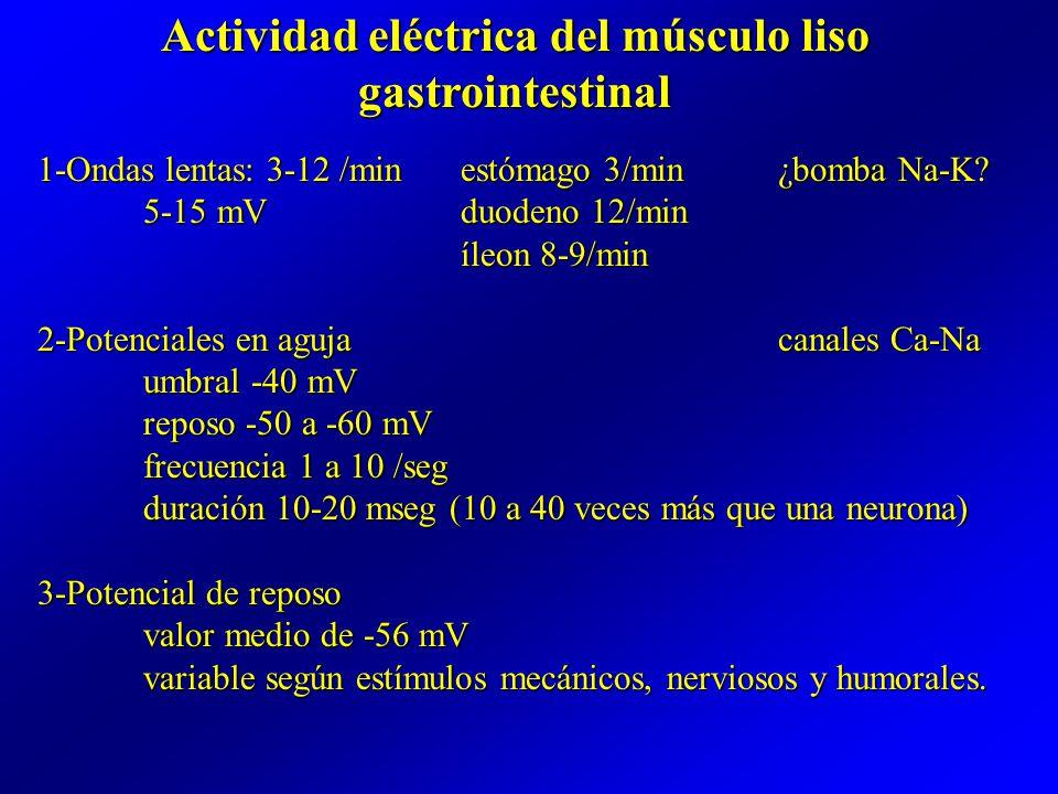 FISIOLOGIA DIGESTIVA (BCM II) - ppt video online descargar