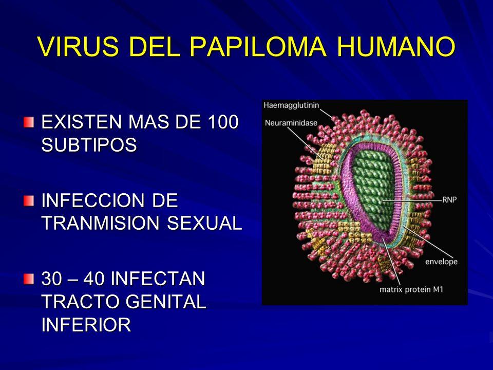 Virus del papiloma microbiologia