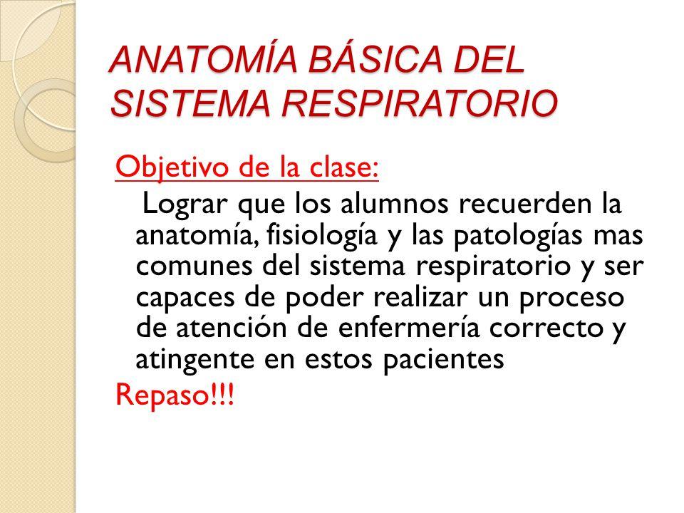 APARATO RESPIRATORIO. - ppt video online descargar