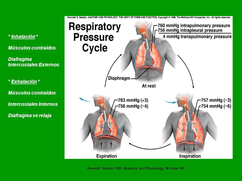 Sistema Respiratorio Karen I. Soto, PhD. - ppt video online descargar