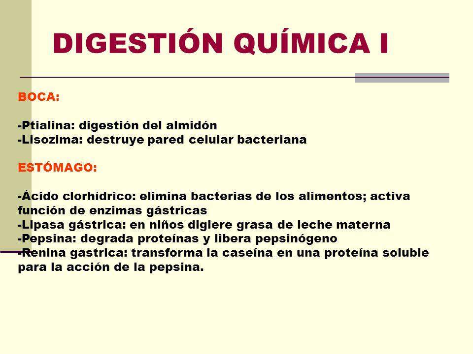 Encantador Digestión Mecánica En El Estómago Componente - Anatomía ...