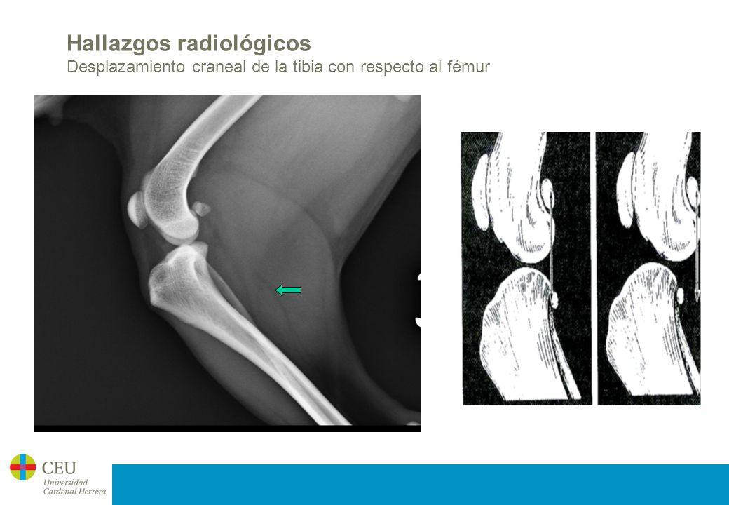 Rotura ligamento cruzado craneal - ppt video online descargar