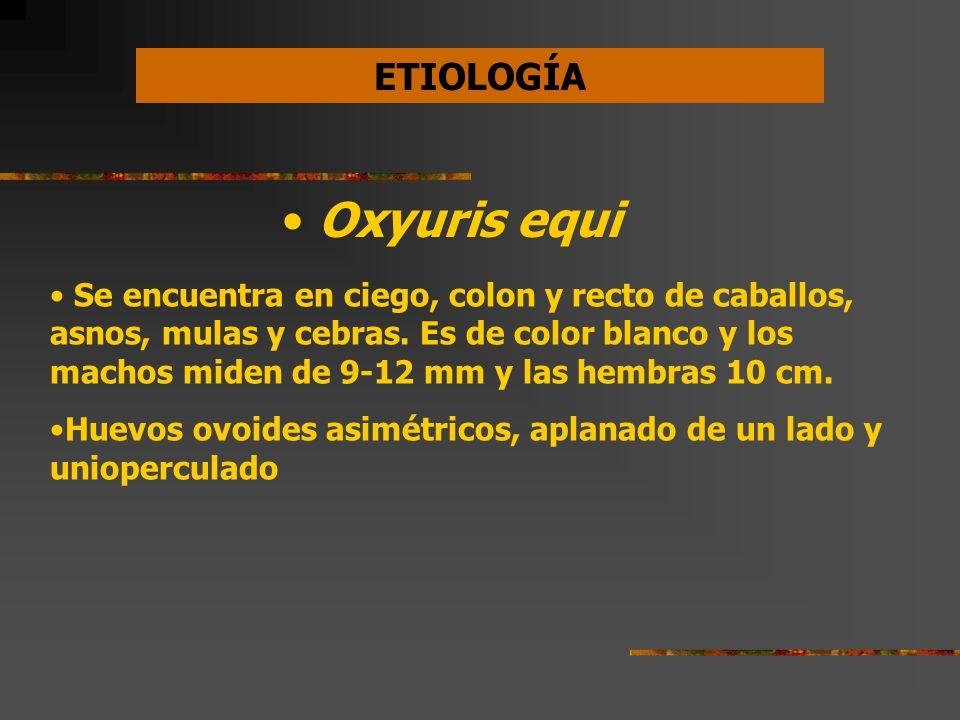 Diagnostico de oxyuris equi, Ciclo de vida oxyuris equi, Papillomatosis meaning