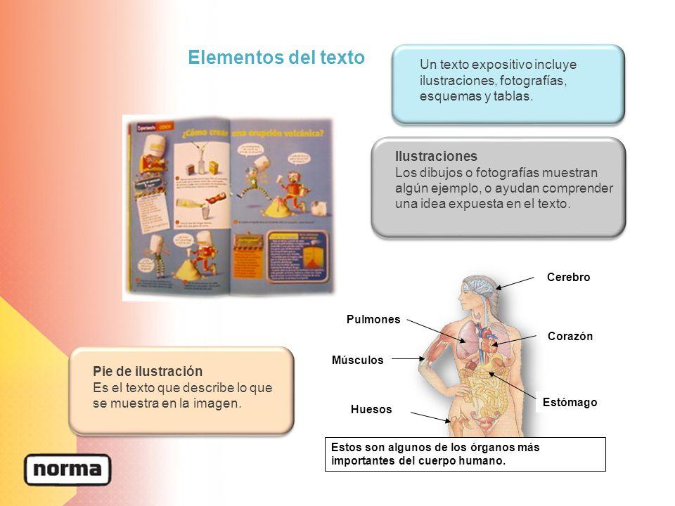 Magnífico Cuerpo Tabla De Localización De órgano Ideas - Imágenes de ...