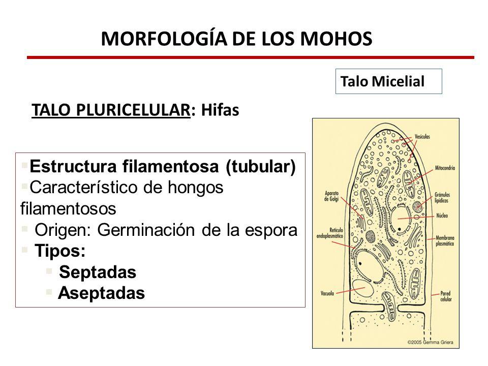 Micologia Basica Ppt Descargar