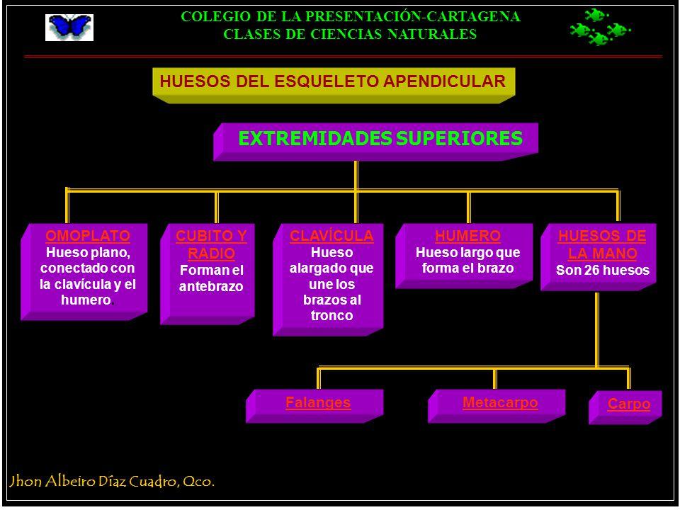Único Prueba De La Anatomía De Las Extremidades Superiores Imágenes ...