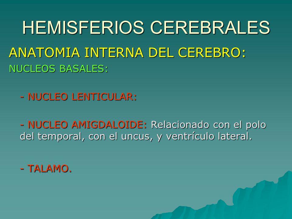 HEMISFERIOS CEREBRALES - ppt video online descargar