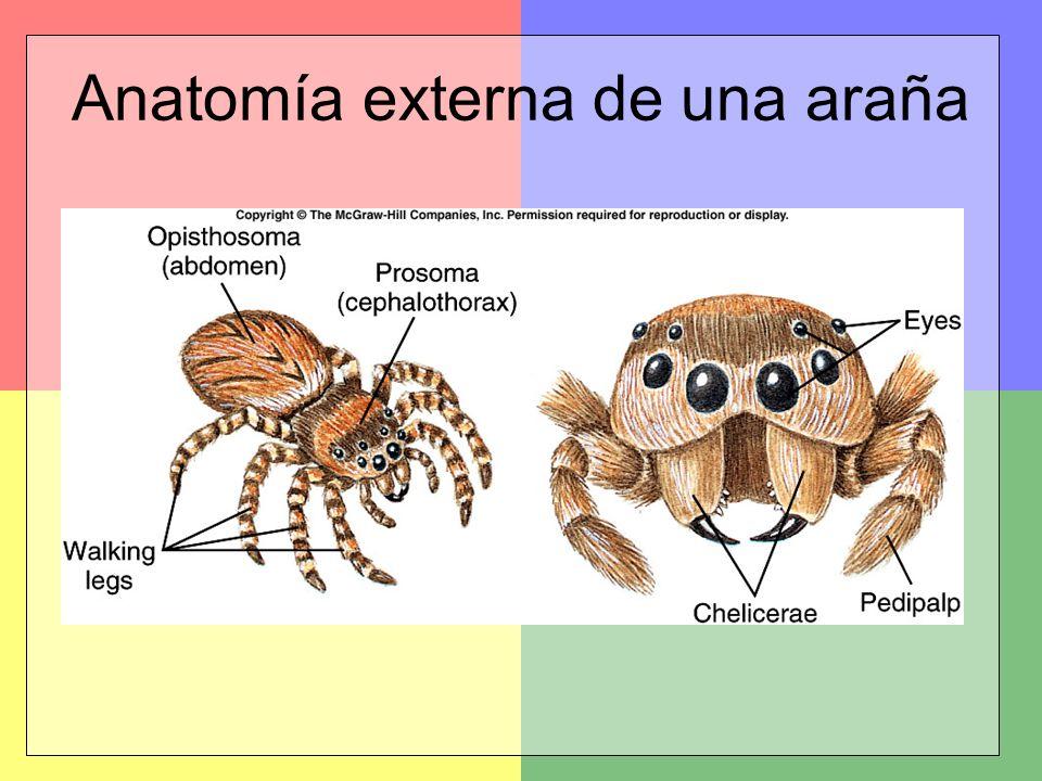 Subphylum Trilobita Subphylum Chelicerata - ppt video online descargar