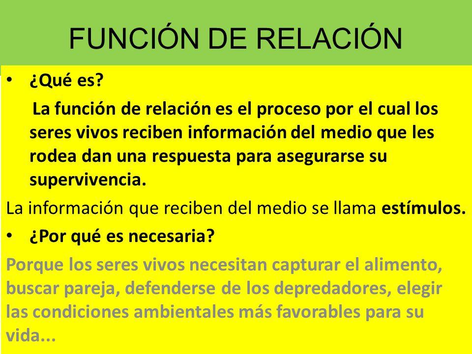 Resultado de imagen de FUNCION DE RELACION