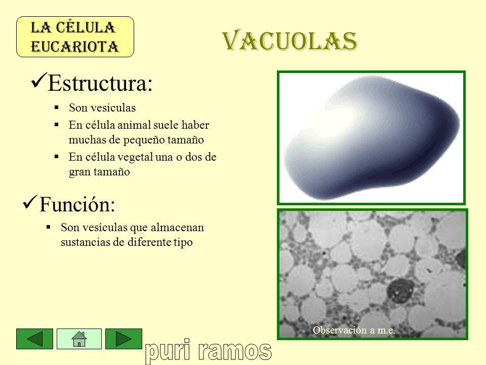 La Célula Eucariota Observación A Microscopía Electrónica