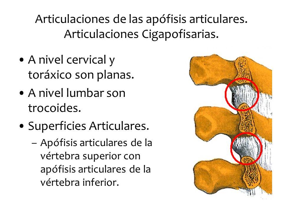 superficies articulares lumbar