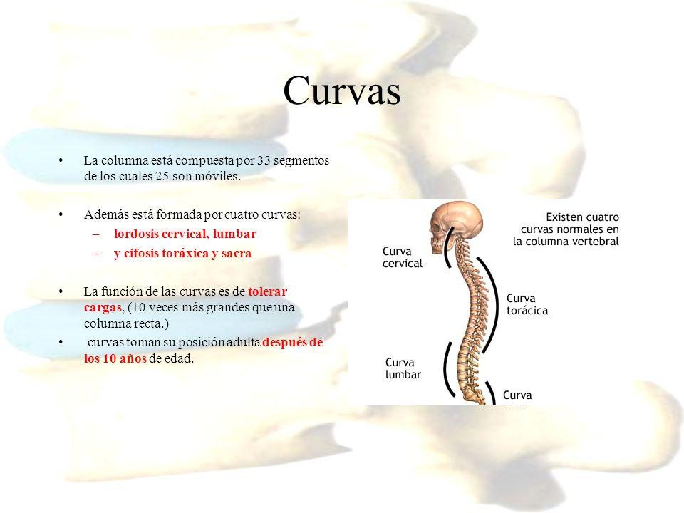 Vista general de la anatomía de columna - ppt descargar