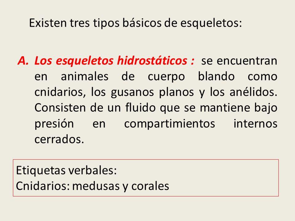 EL MOVIMIENTO DE LOS ANIMALES - ppt video online descargar