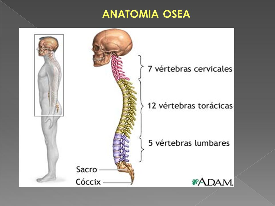 UNIVERSIDAD DE ORIENTE ESCUELA DE CIENCIAS DE LA SALUD - ppt video ...