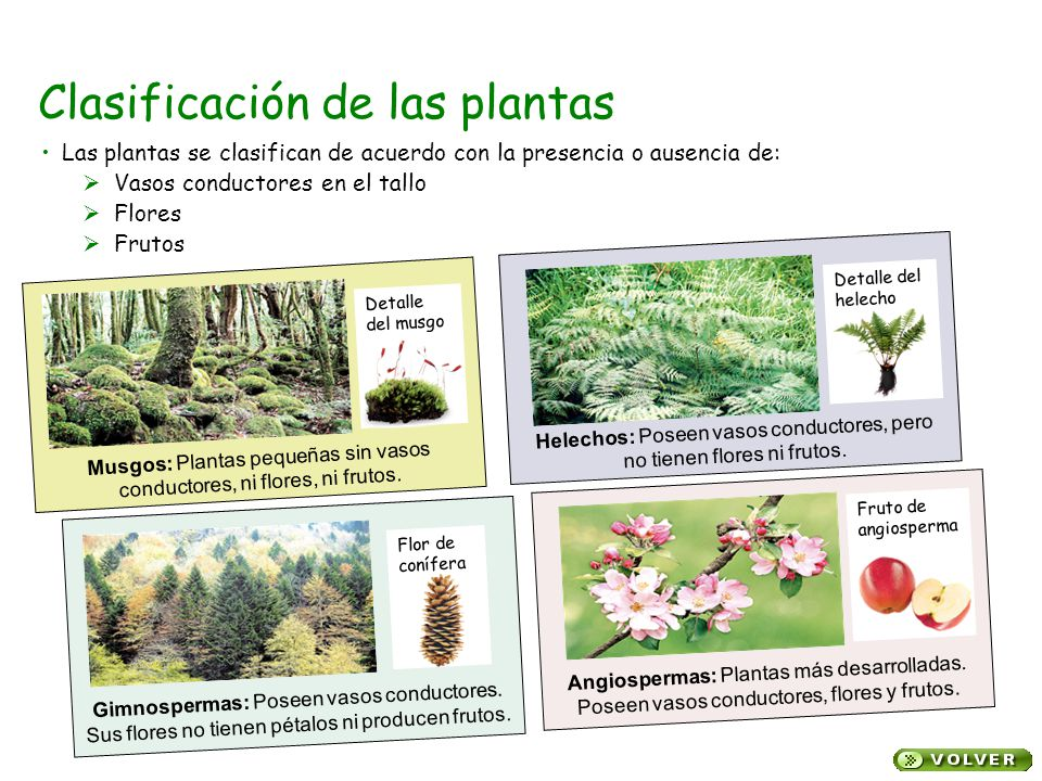 Colegio claretiano ppt video online descargar for Clasificacion de las plantas ornamentales