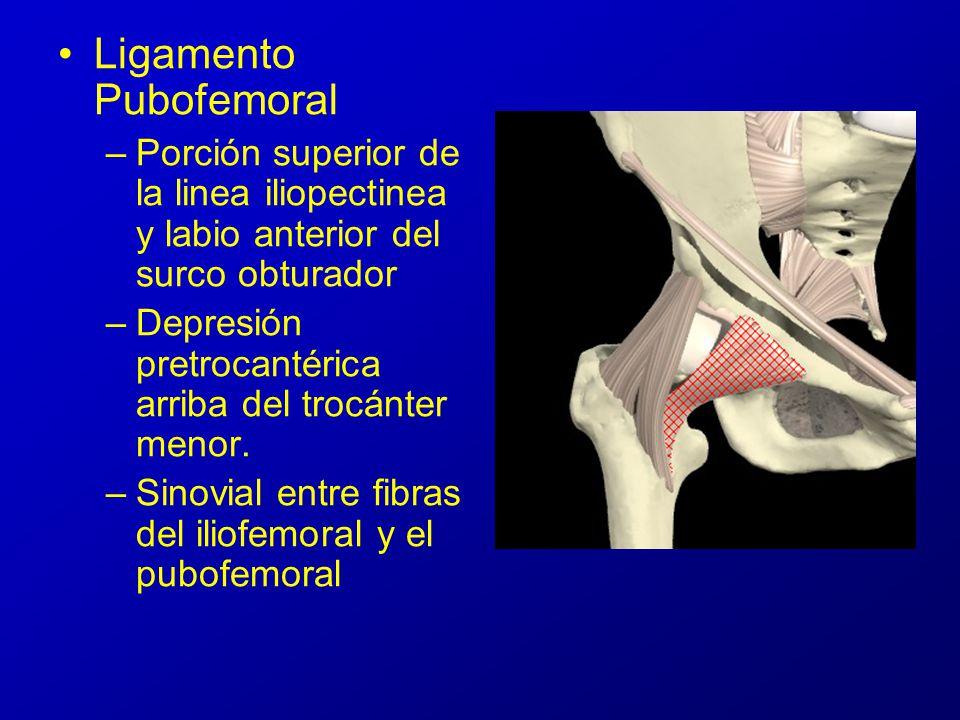 Articulación Coxofemoral - ppt video online descargar