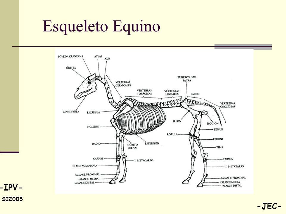 Perfecto Esqueleto Anatomía Caballo Bosquejo - Anatomía de Las ...