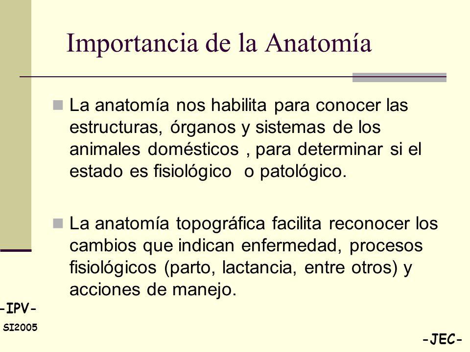 Atractivo Importancia De La Anatomía Ornamento - Imágenes de ...