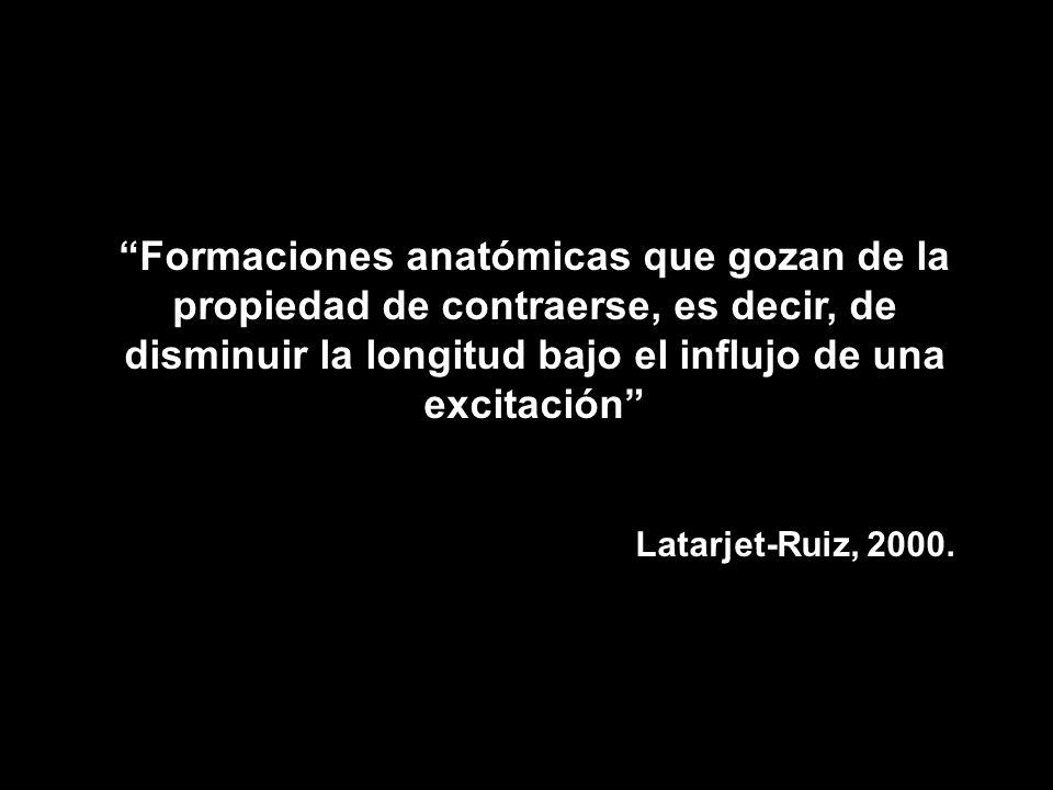 Miología generalidades. - ppt video online descargar