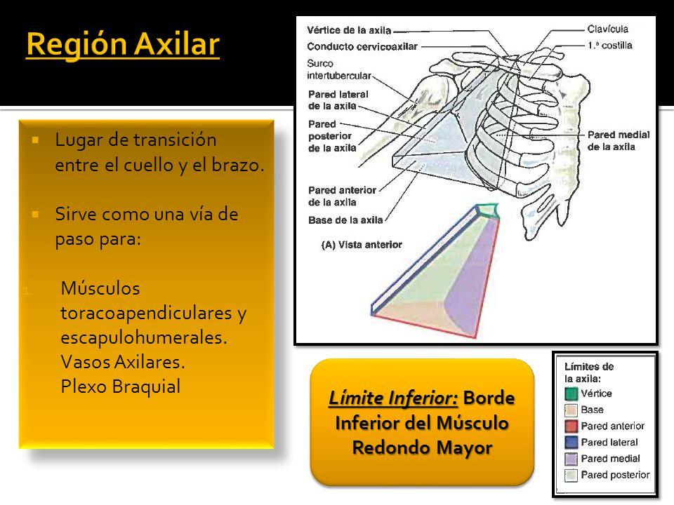 MMSS. Irrigación Región Axilar y Braquial - ppt descargar