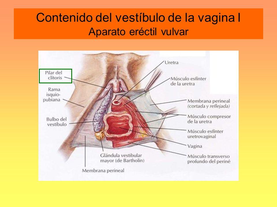 I CURSO DE ACTUALIZACION EN PATOLOGIA DE LA VULVA - ppt video online ...