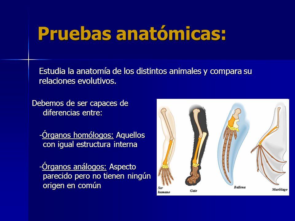 PRUEBAS DE LA EVOLUCIÓN - ppt descargar