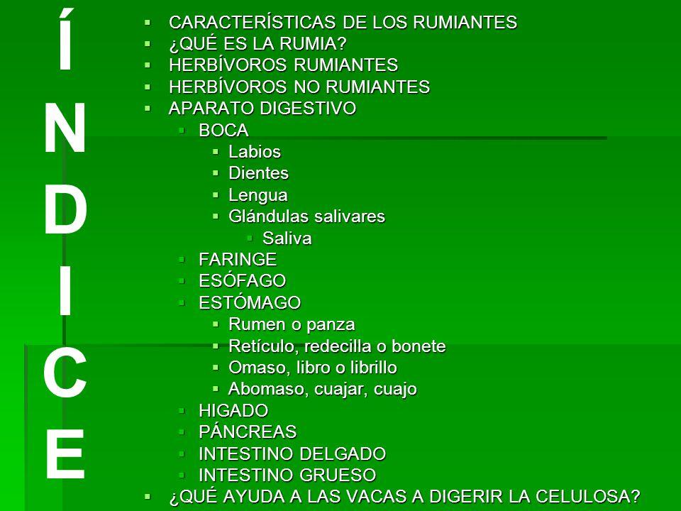 LOS RUMIANTES. - ppt video online descargar