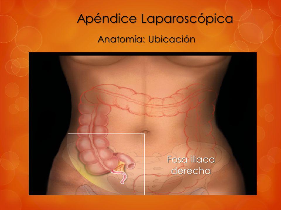 Apéndice Laparoscópica - ppt video online descargar