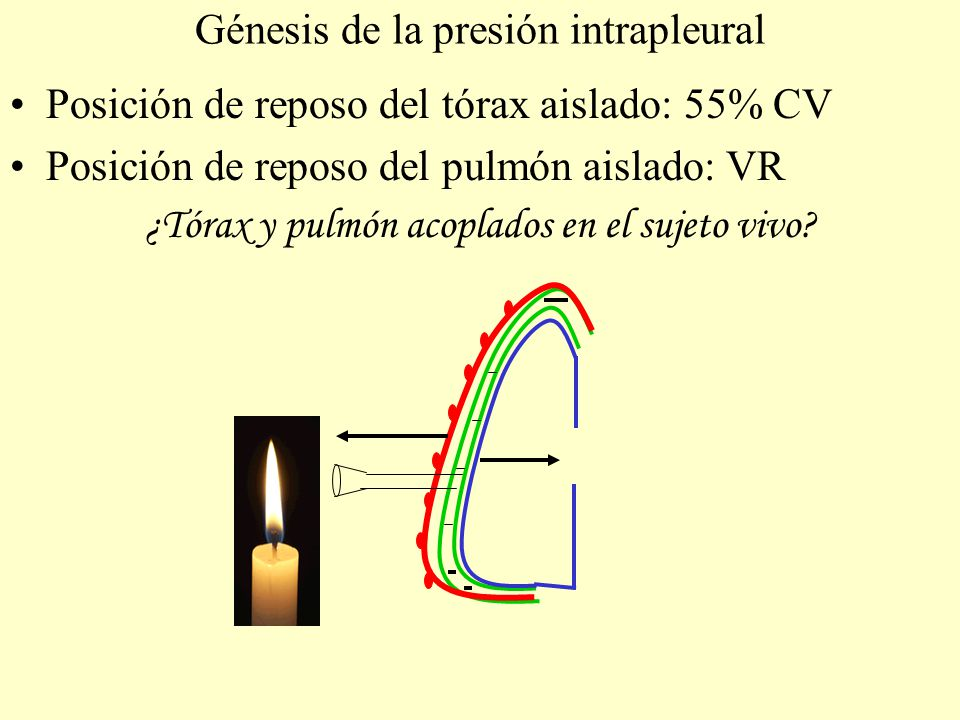 Anatomía AD AI VD VI Pleura Parietal Pleura Visceral - ppt video ...