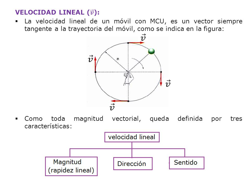 VELOCIDAD LINEAL ( 𝒗 ):