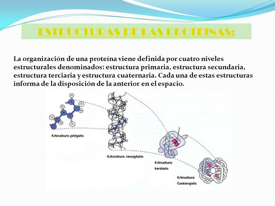 Niveles Estructurales De Las Proteinas Ppt Video Online