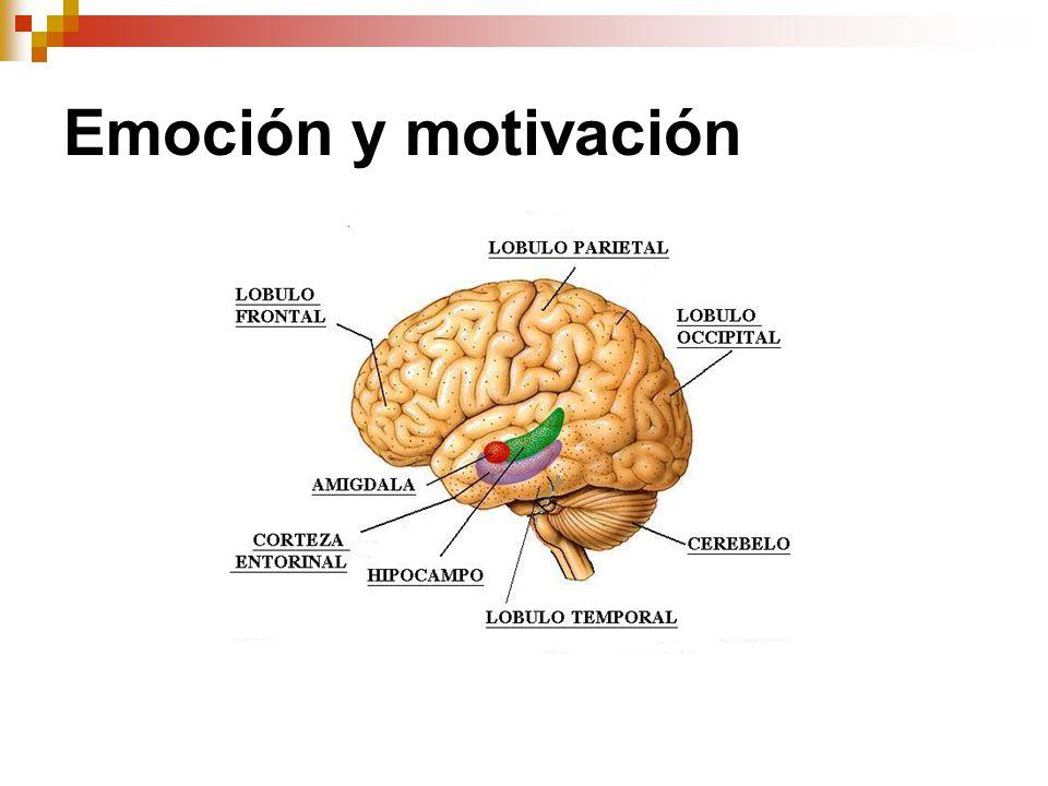 Bases Biológicas De Las Emociones Ppt Descargar