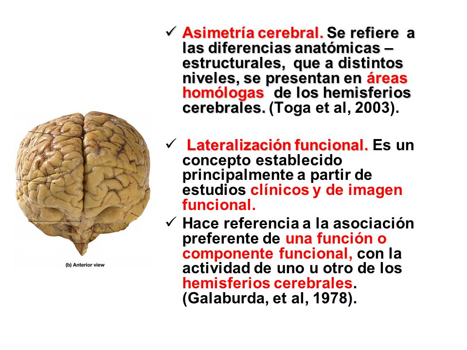 ASIMETRÍA FUNCIONAL CEREBRAL - ppt video online descargar