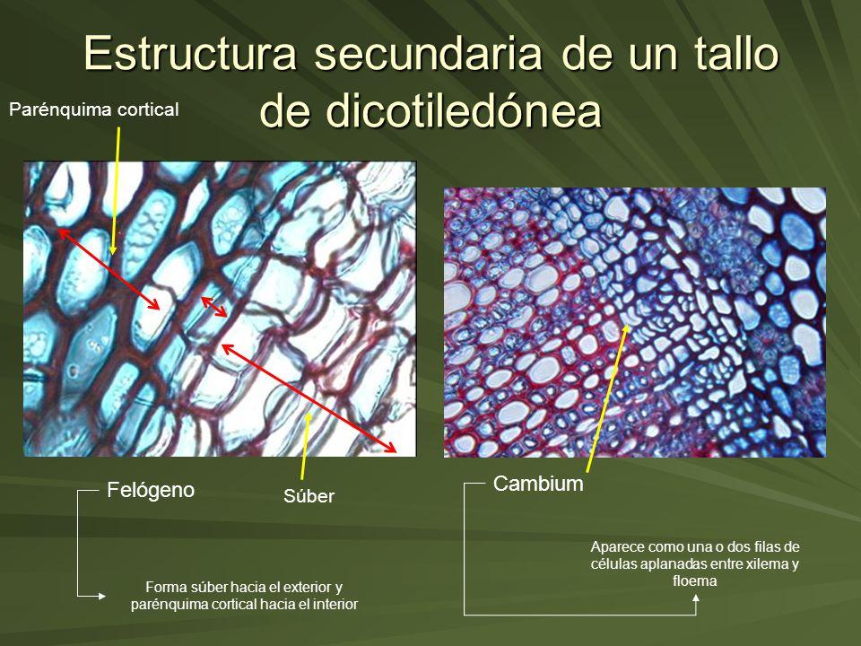 Histología Y Organografía Vegetal Ppt Video Online Descargar