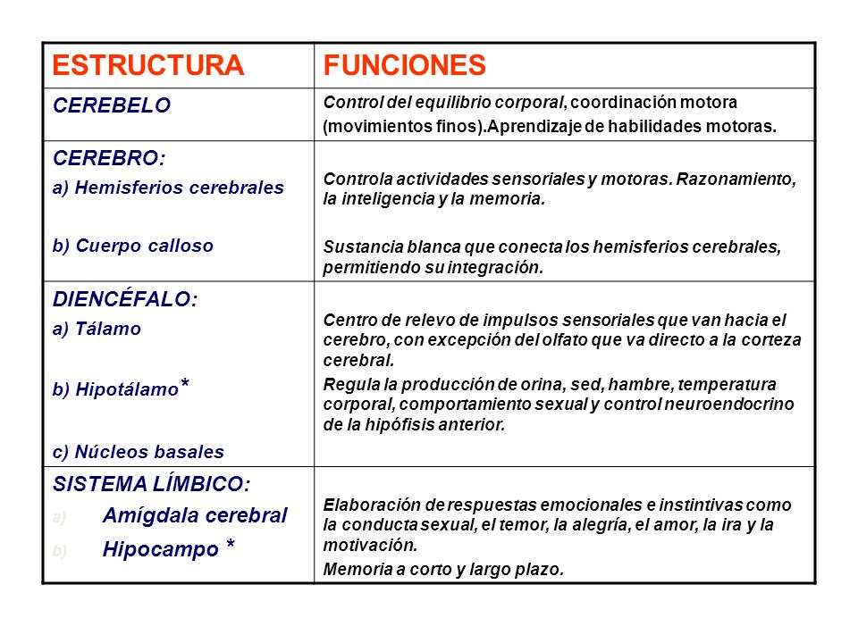 El Cerebro. - ppt video online descargar